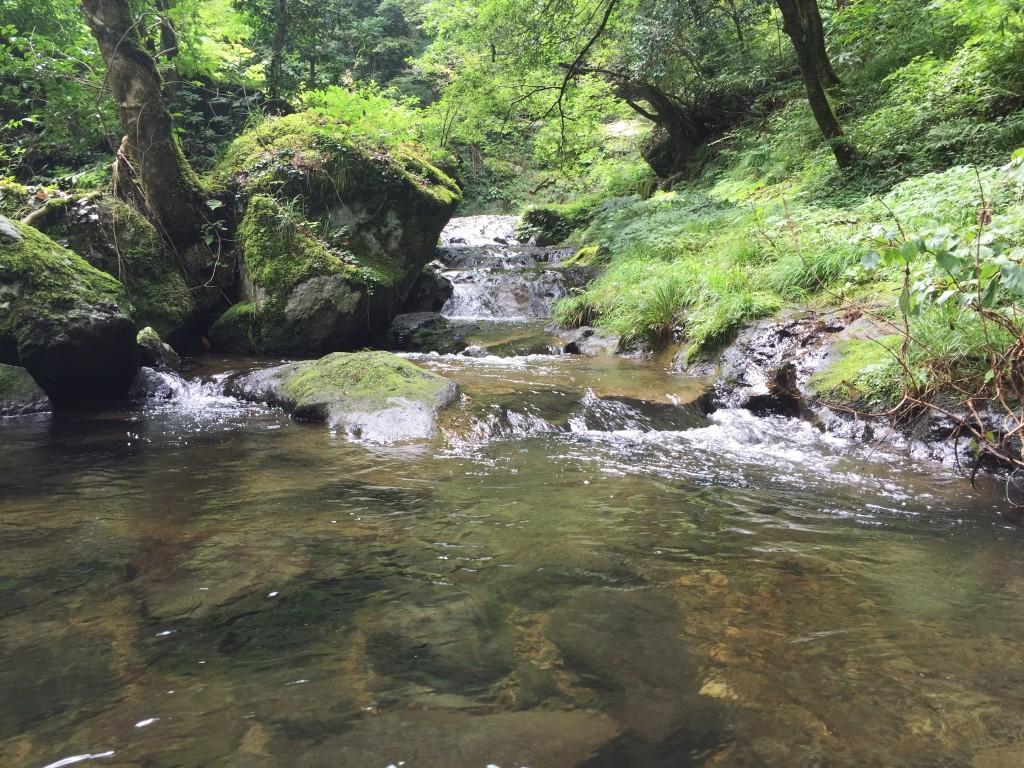 竜頭ヶ滝川