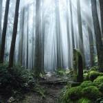 お盆特別企画|霊の癒しと解放